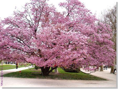 printemps_en_fleur