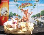Disney_Bolt_Beverly_Hills_Chihuahua_DVD_Release_Bg2Xskreq22l