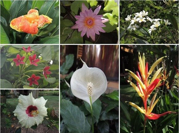 13-fleurs