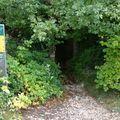 2009 09 19 Un chemin sous les arbres au Col des Limouches