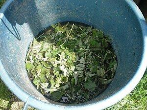 L ortie un tr sor pour mon jardin mon domaine de poulpiquet - Comment faire du purin d ortie ...