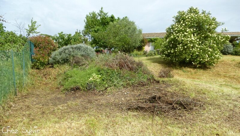 Potager permaculture 13