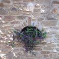 La plante violette dont je ne sais pas le nom
