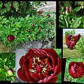 Fleurs... du jardin