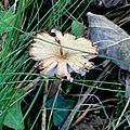 champignon-05923 (9)