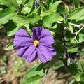 Zoom sur une fleur mauve