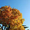 Le ciel brillant de l'automne