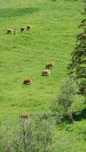 1351- Conversaria - Rando Vercors 16062013 (32)