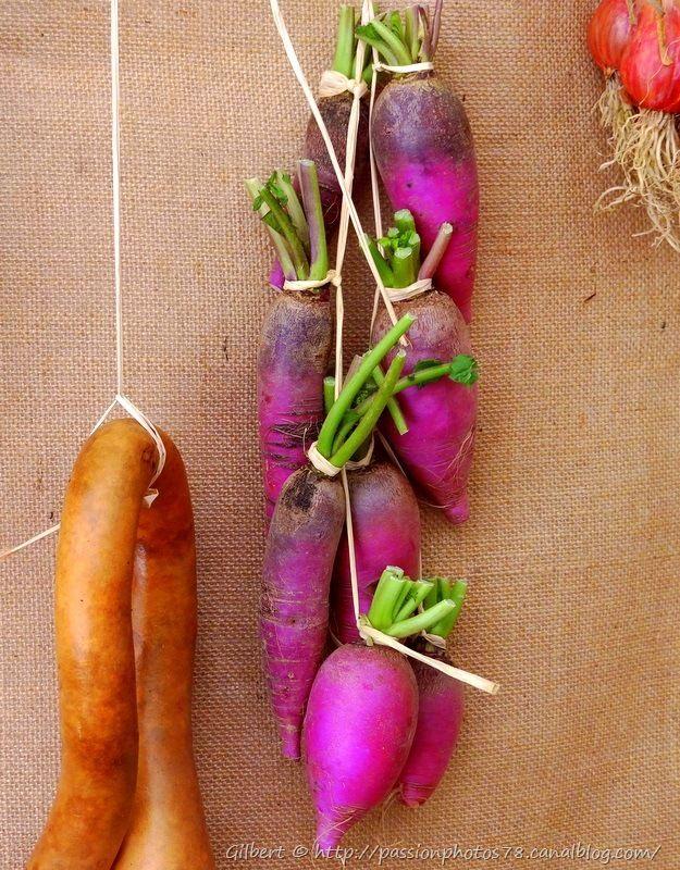 Les légumes d'autrefois (22)