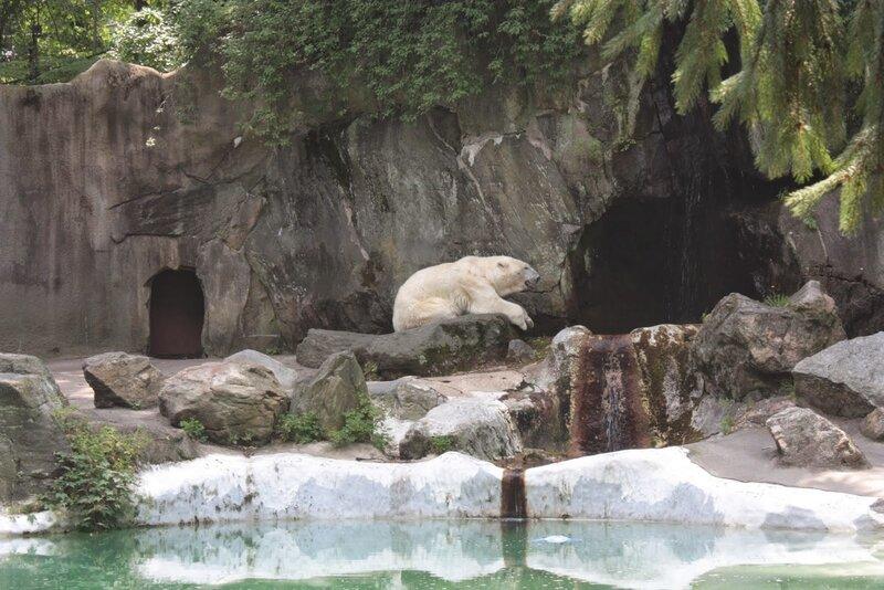 J11 - 08 juillet 2014 - zoo du Bronx (139).JPG