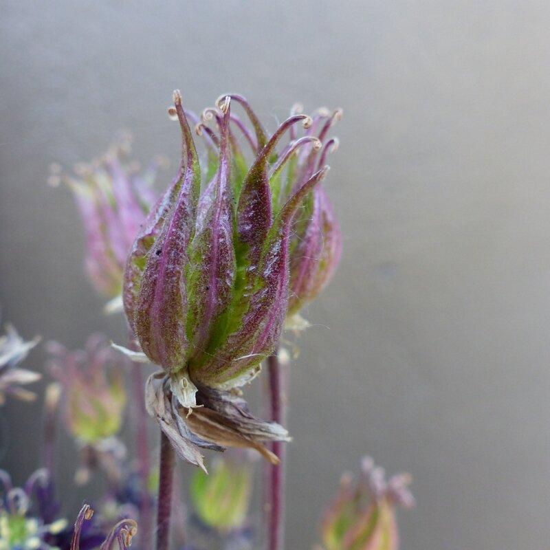 aa fleurs jardin4