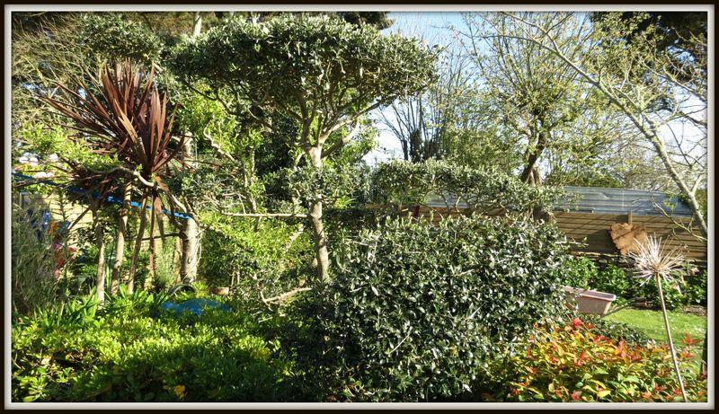 Taille olivier en nuages alex paysagiste groix for Taille olivier en nuage