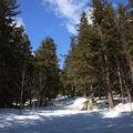 2009 04 01 Au milieu des bois au pied du Mont Mézenc