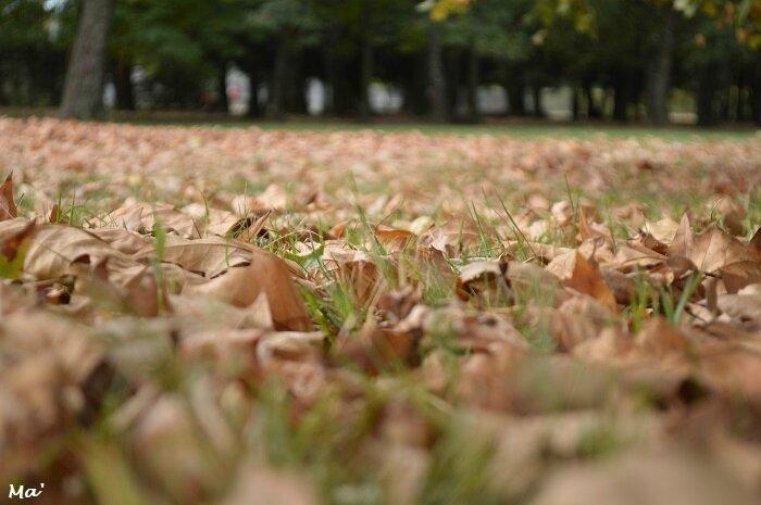171008_automne_parc_lorient_2