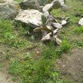 Les roches du jardin exotique