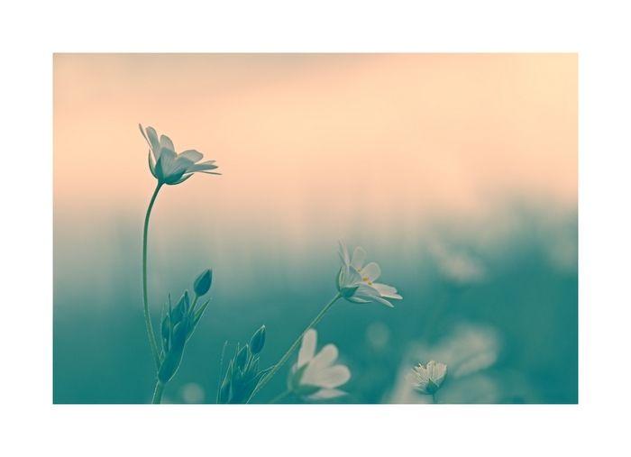 peace__love_copie700