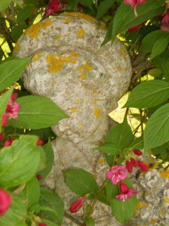 jardin et déco Lyne mai 2012 023