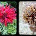 De la fleur a la graine....