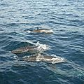 De Ste Anne Chatham Bay