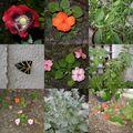 Mosaique au jardin - juillet