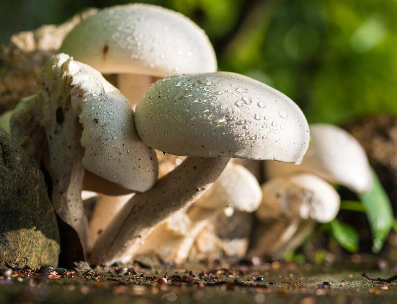 mushroom-372044_1920