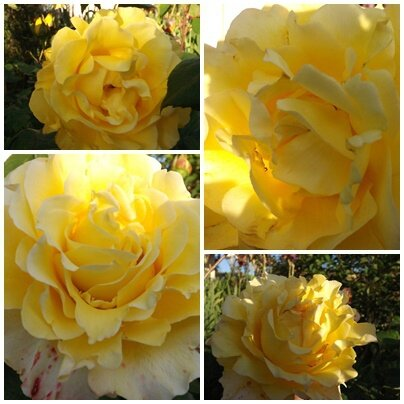 Ciel 10 06 & fleurs (19)