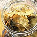 Hip ! qu'est-ce que vous faites avec ces feuilles de figuier ?