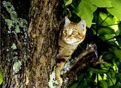 Jardinature_chat_arbre1
