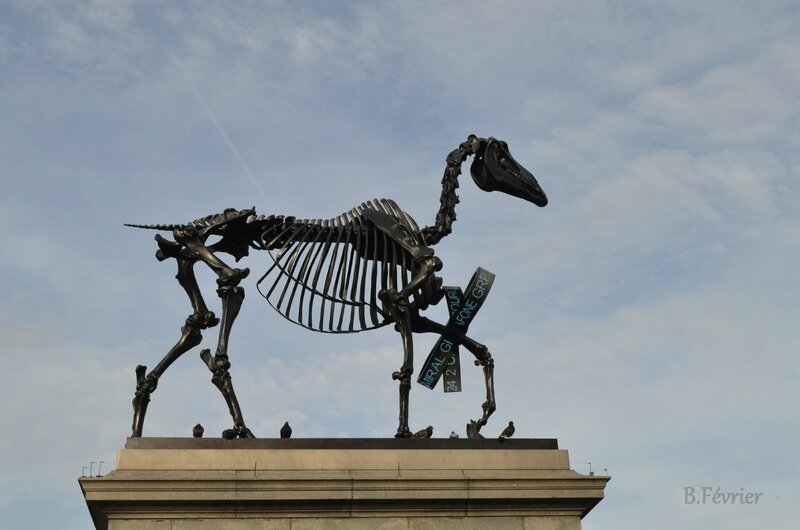 Royaume uni - Londres - Trafalgar square - Cheval