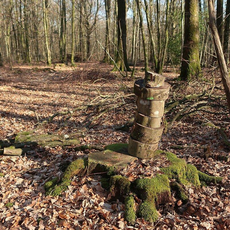 forêt 26 d
