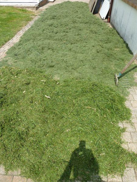 26-pelouse paillage (2)