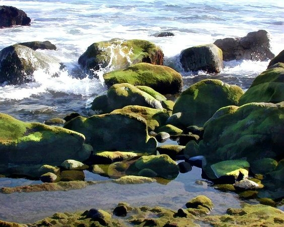 elaine plesser - coastal tidepools