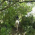 balade à cheval médiévale - Abbaye de Hambye (73)