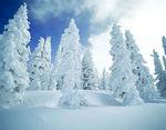 neige_bleue_1000