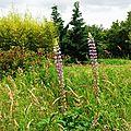 Jardin Poterie Hillen 12061637