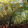 Feuillages automne 2811155