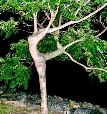 l_arbre_qui_dance