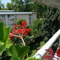 088 Notre jardin!!