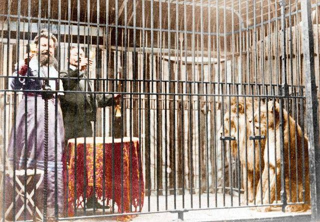 Clémentine Delait dans la cage aux lions
