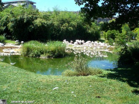 6658_Flamants_roses