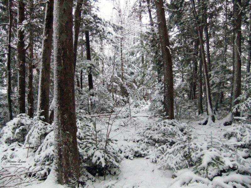sentier neige bois
