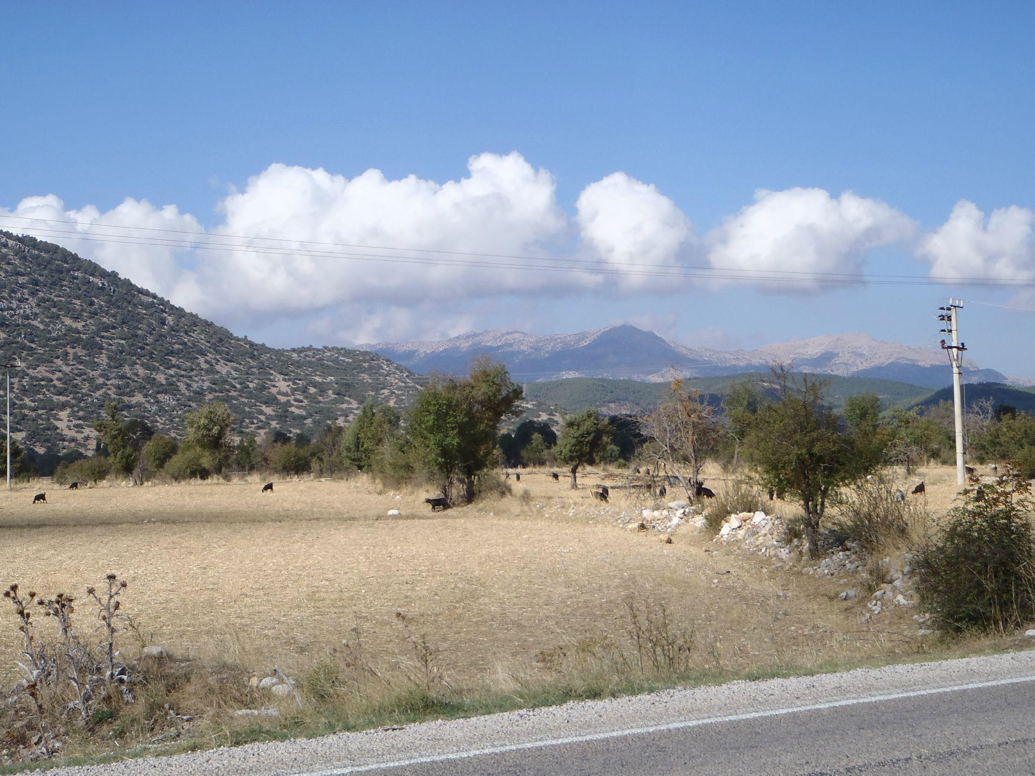turquie descente vers dalyan troupeau de chevre