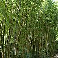 bambouseraie (7)
