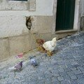 Drles d'animaux  attacher dans la rue...