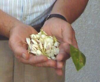 Fleurs récoltées