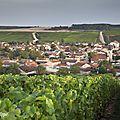 Dans les vignes à baroville