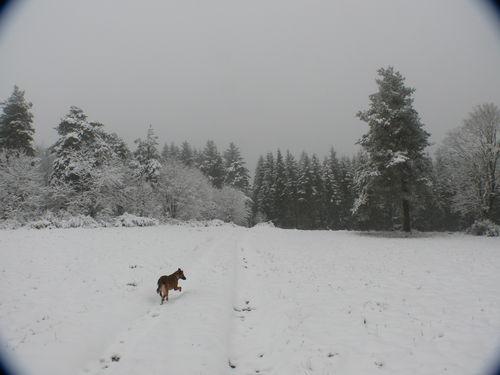 2008 10 29 Kapy ouvre le chemin dans la neige