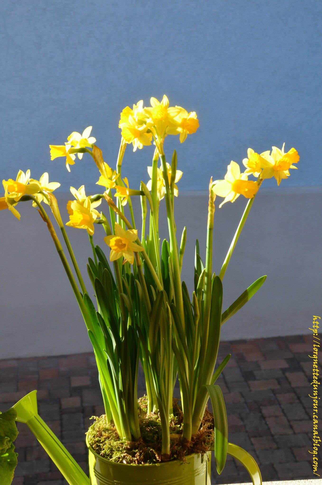 21/02/14 : Encore quelques fleurs pour patienter jusqu'au printemps