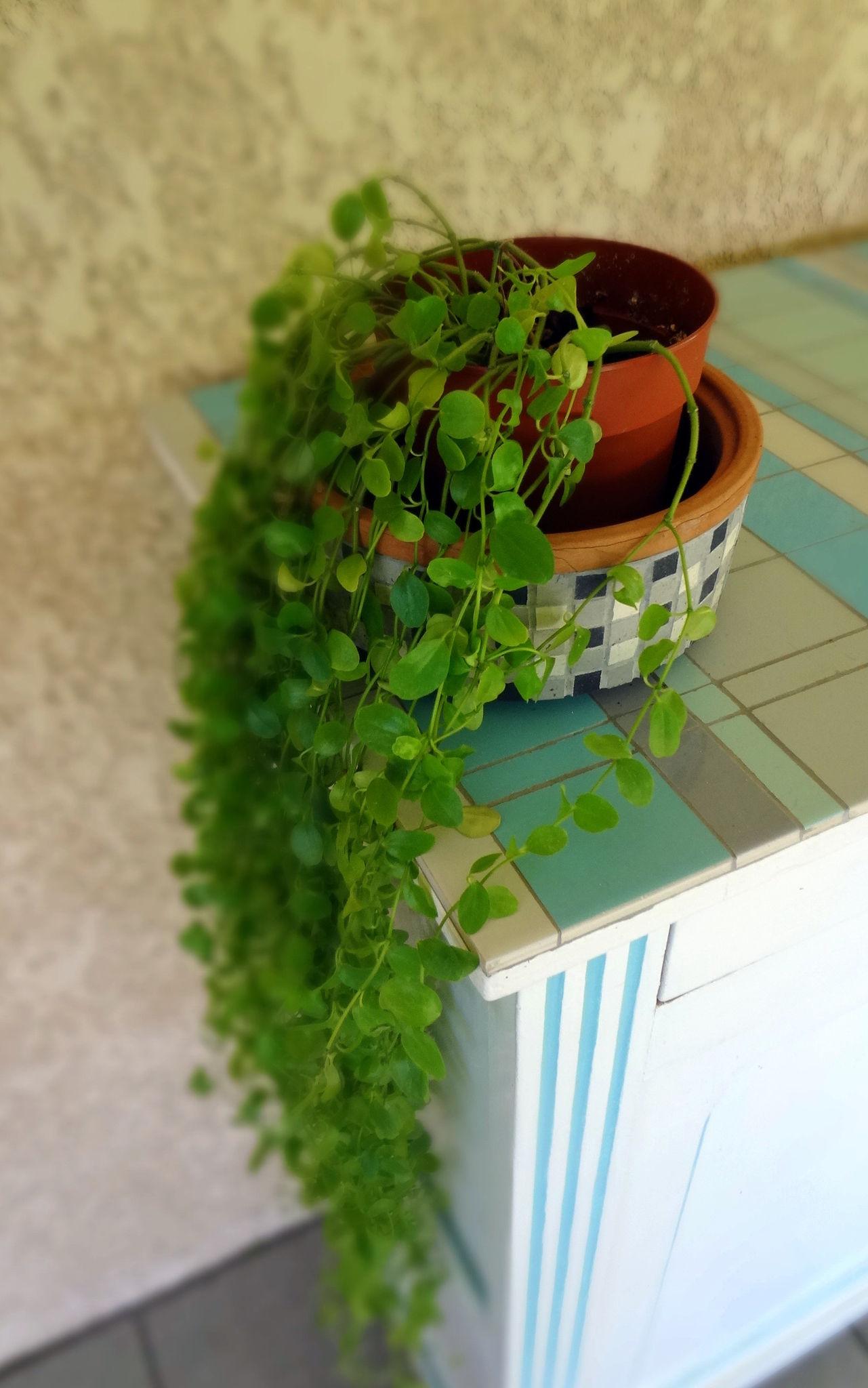 Un peu de verdure mille et un clats - Plante retombante exterieur ...