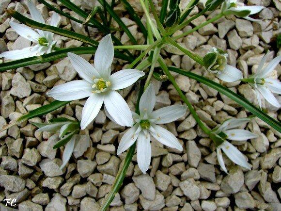 Plante Sauvage A Fleur Blanche Fleur Jaune 8 Lettres Maison